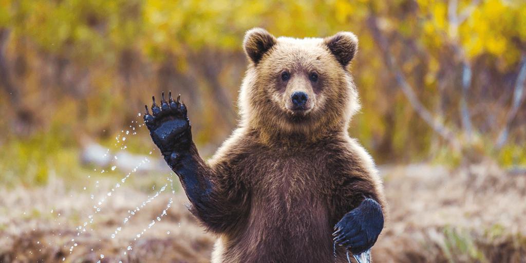 Одной левой! Купить бафф и победить медведя — легко.